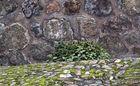 ...piedra y musgo...