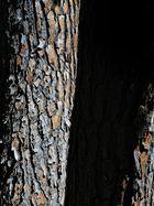 Piel de tronco