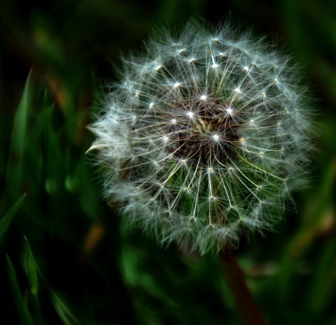 Piensa un deseo