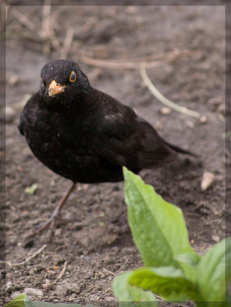 *piep* *piep* ein Vögelchen