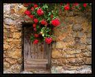 pierres et rose