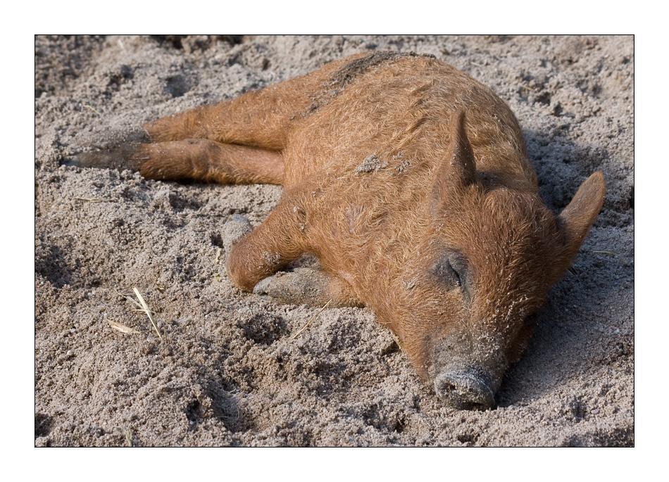 Pig-Nick