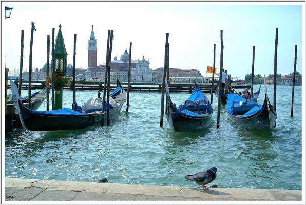 Pigeon, Gondole, canal : Venise