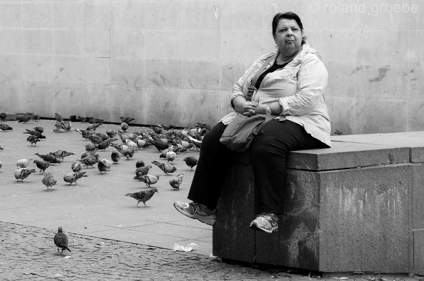 pigeon watching