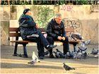 Pigeons-becquée