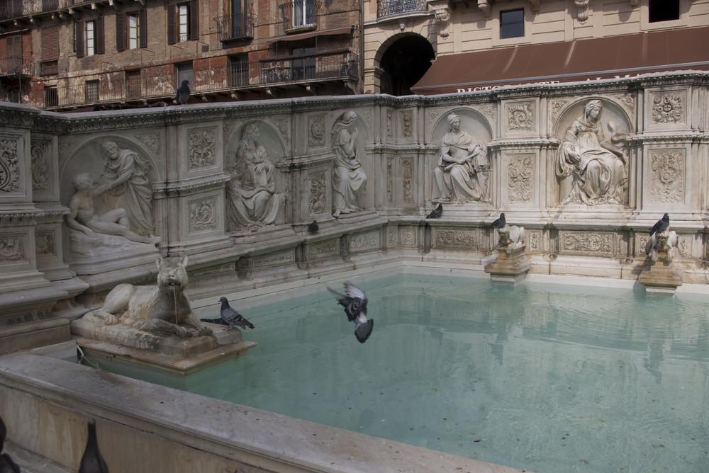 Pigeons Campo Fonte Gaia