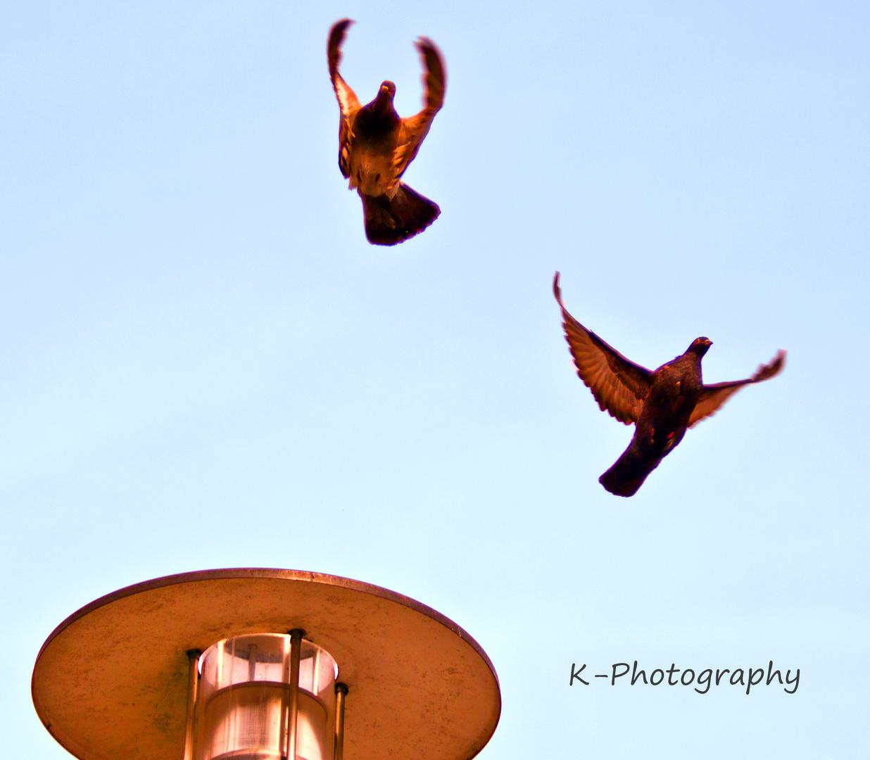 Pigeon`s Dance