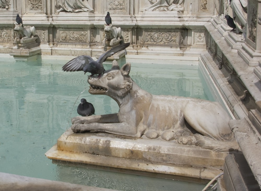 Pigeons de la Fonte Gaia