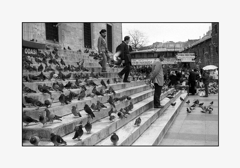 Pigeons, Istanbul, Turquie