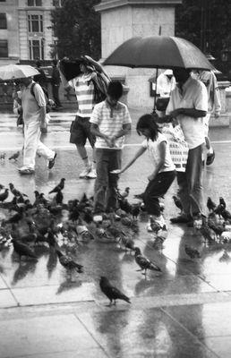 Pigeons Londoniens