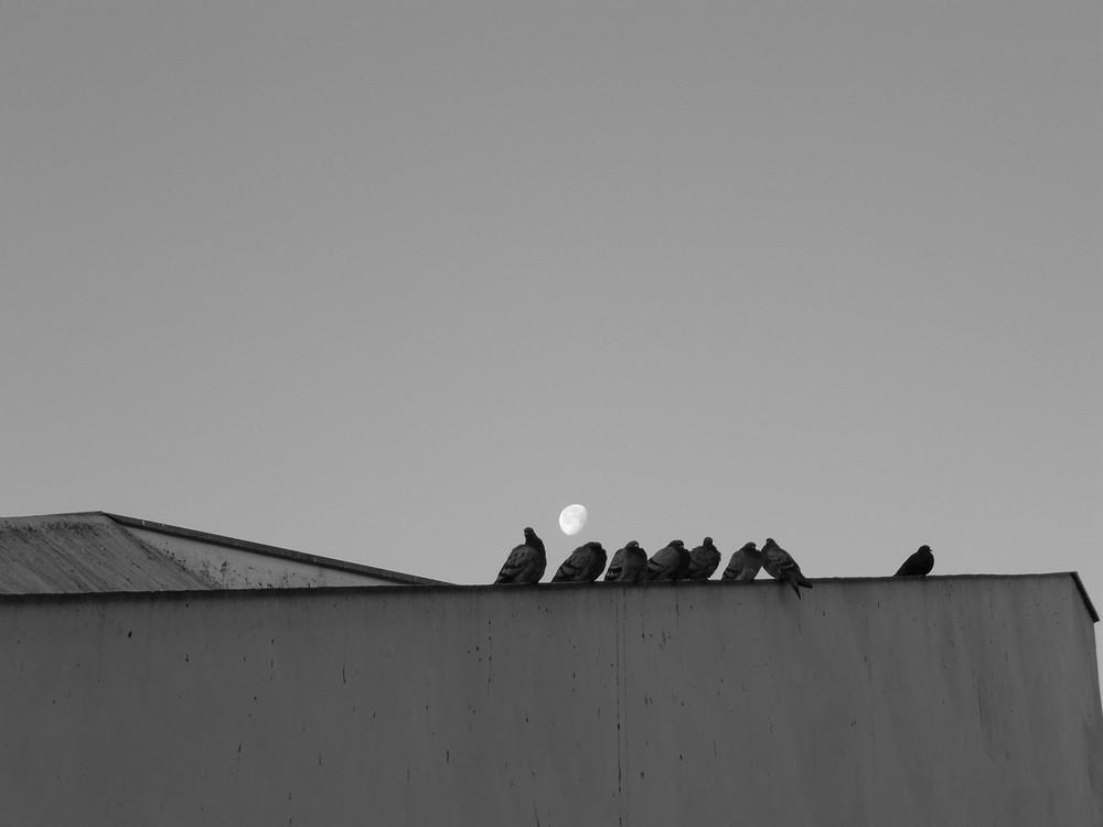 pigeons sur le tour de tele