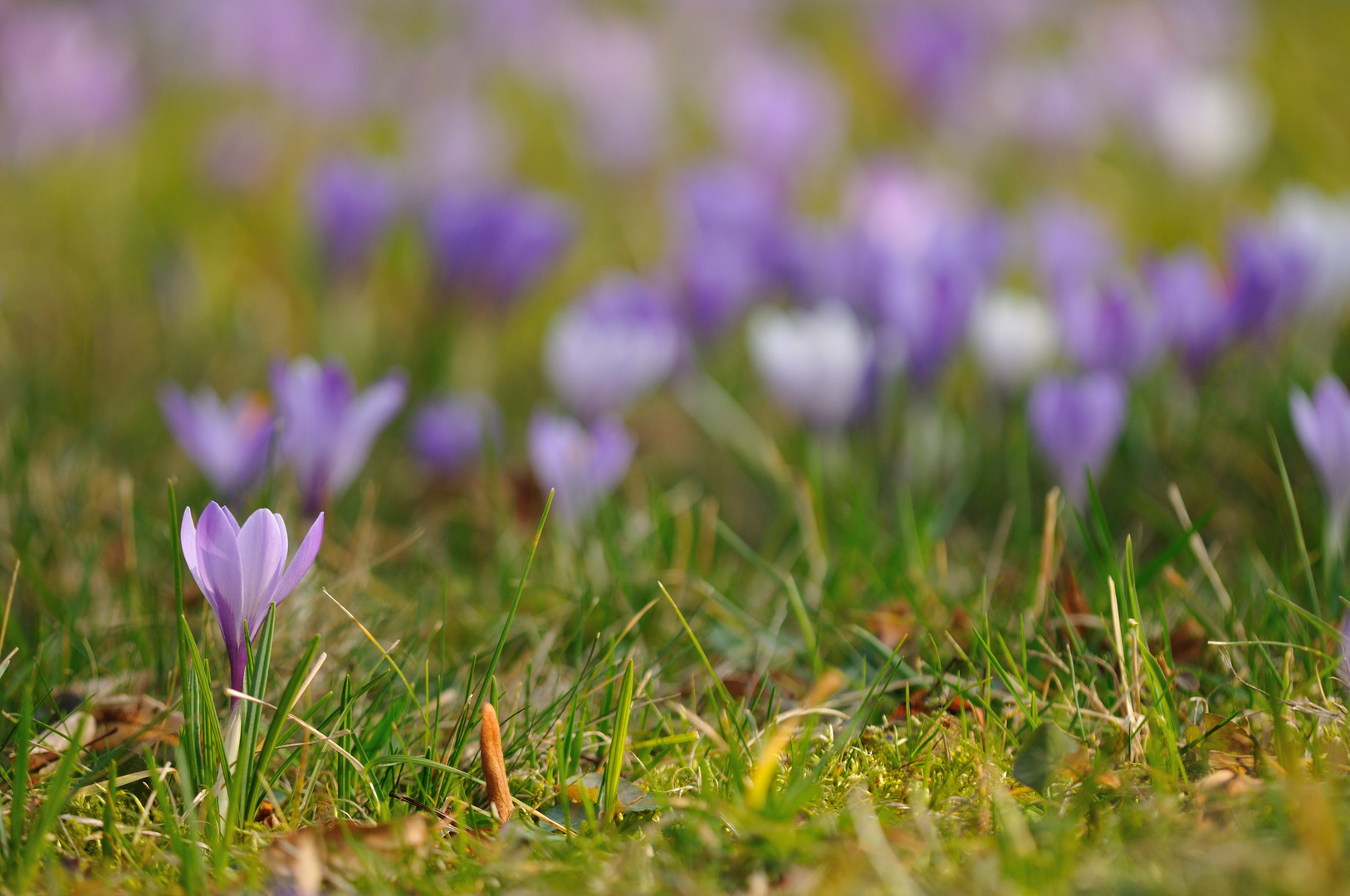 Pillnitzer Frühling