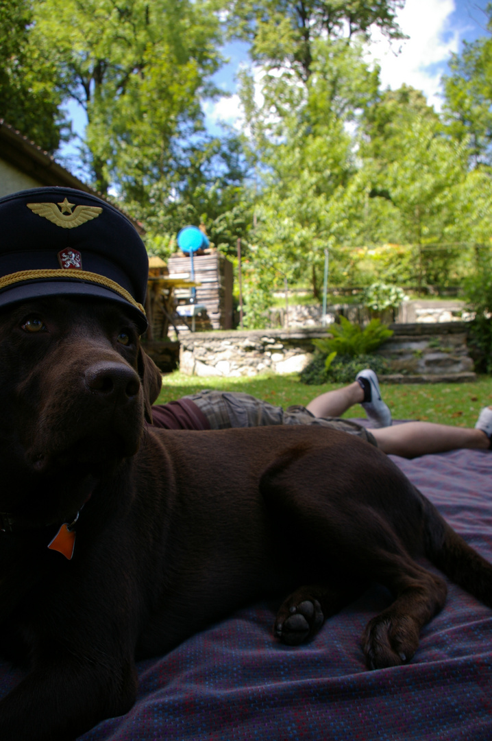 pilot auf vier pfoten.