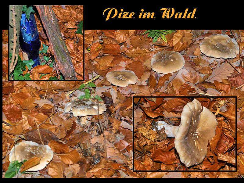 """"""""""""""" Pils & Pilze im Wald """""""""""""""