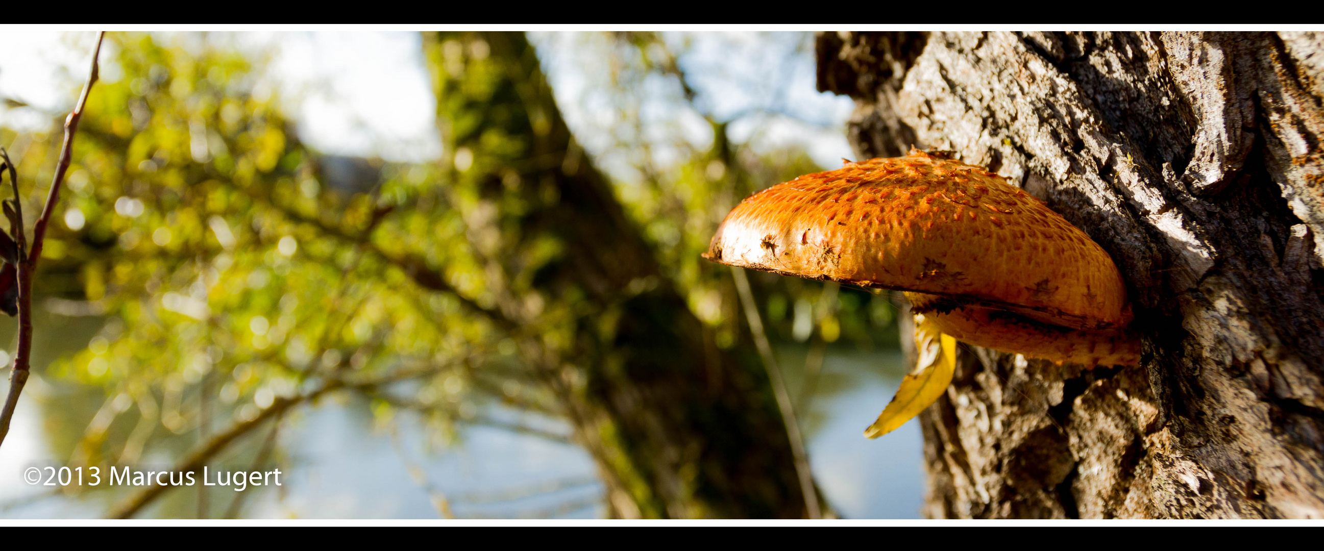 Pilz am Baum