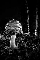 Pilz am Wegesrand
