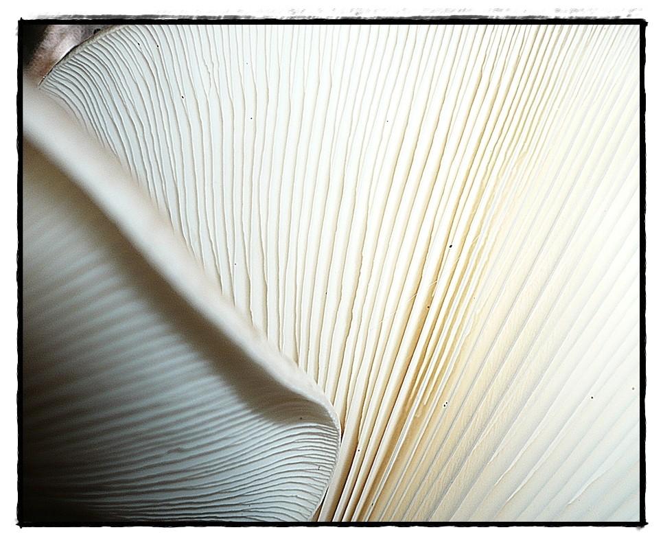 Pilz aus der Mäuseperspektive 3