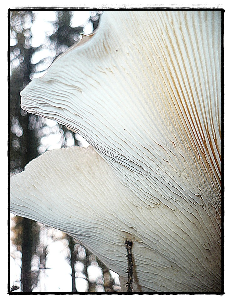 Pilz aus der Mäuseperspektive 4