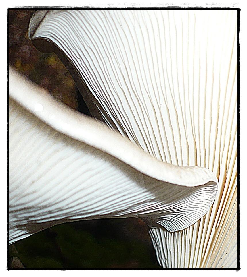 Pilz aus der Mäusespektive 2