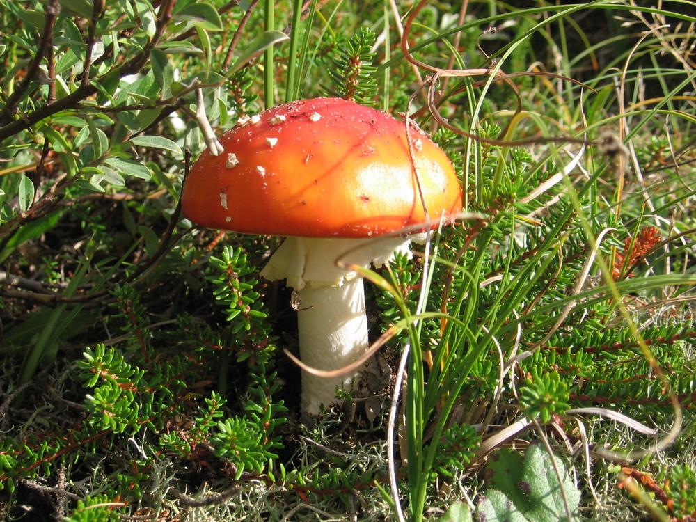 Pilz im Herbst