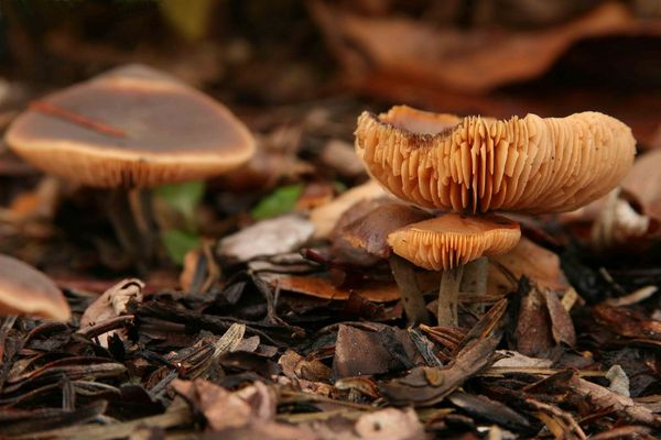 Pilz im Rindenmulch