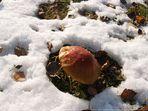 Pilz im Schnee (1)