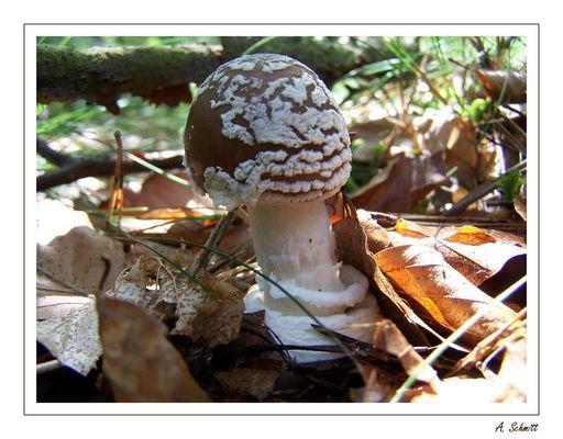 Pilz im Sonnenlicht