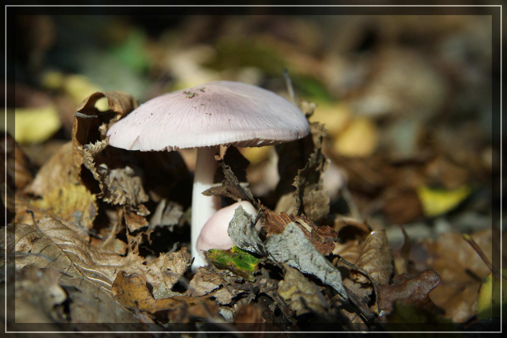 Pilz im Stadtwald