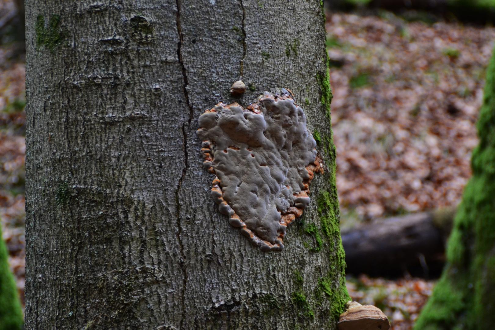 Pilz in Herzform :-)