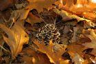 Pilz in leuchtendem Laub