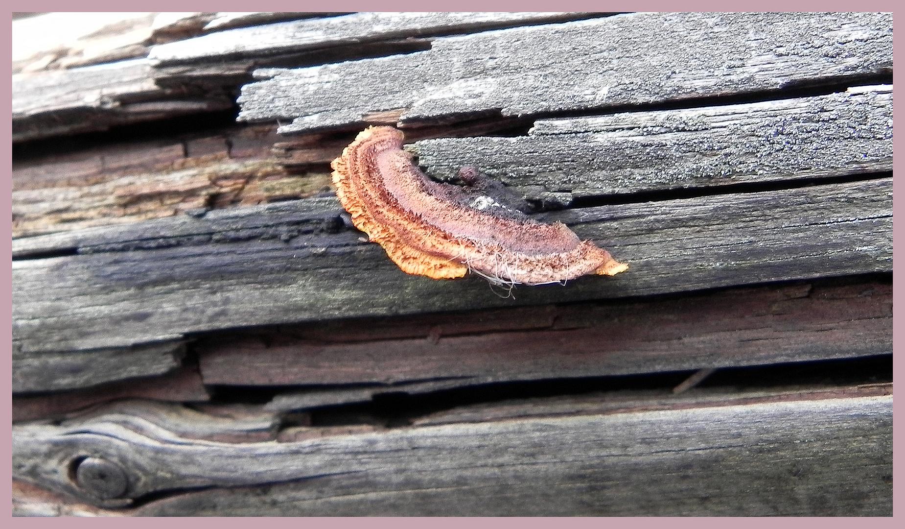 Pilz ist in der kleinsten Ritze