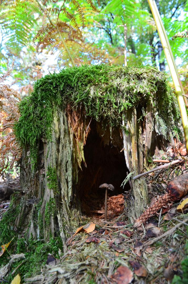 Pilz mit eigenem Haus