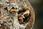 Pilz mit Logenplatz