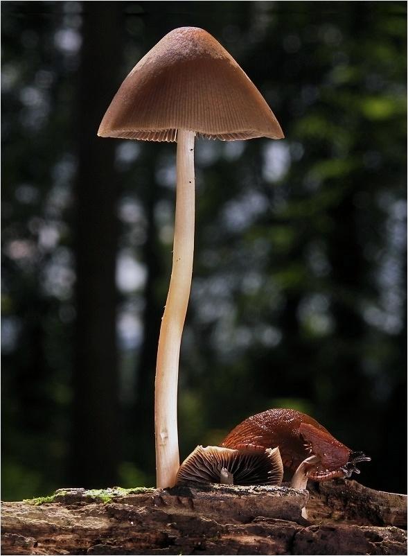 Pilz mit Schnecke
