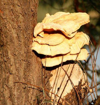 Pilz oder Schwamm?