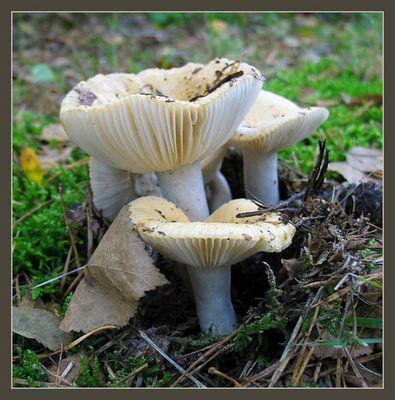 Pilz und Blätter