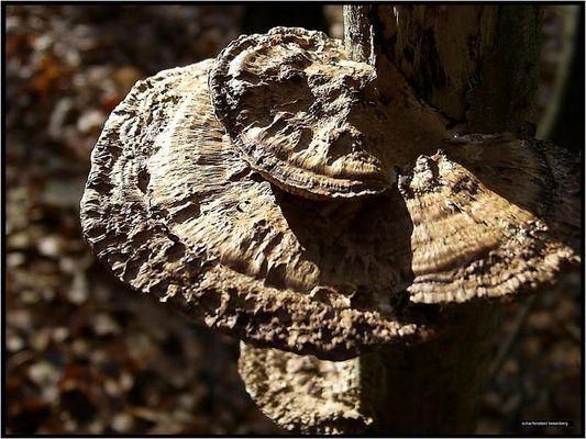 pilzbaum..