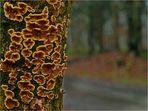 Pilzblick in den Wald