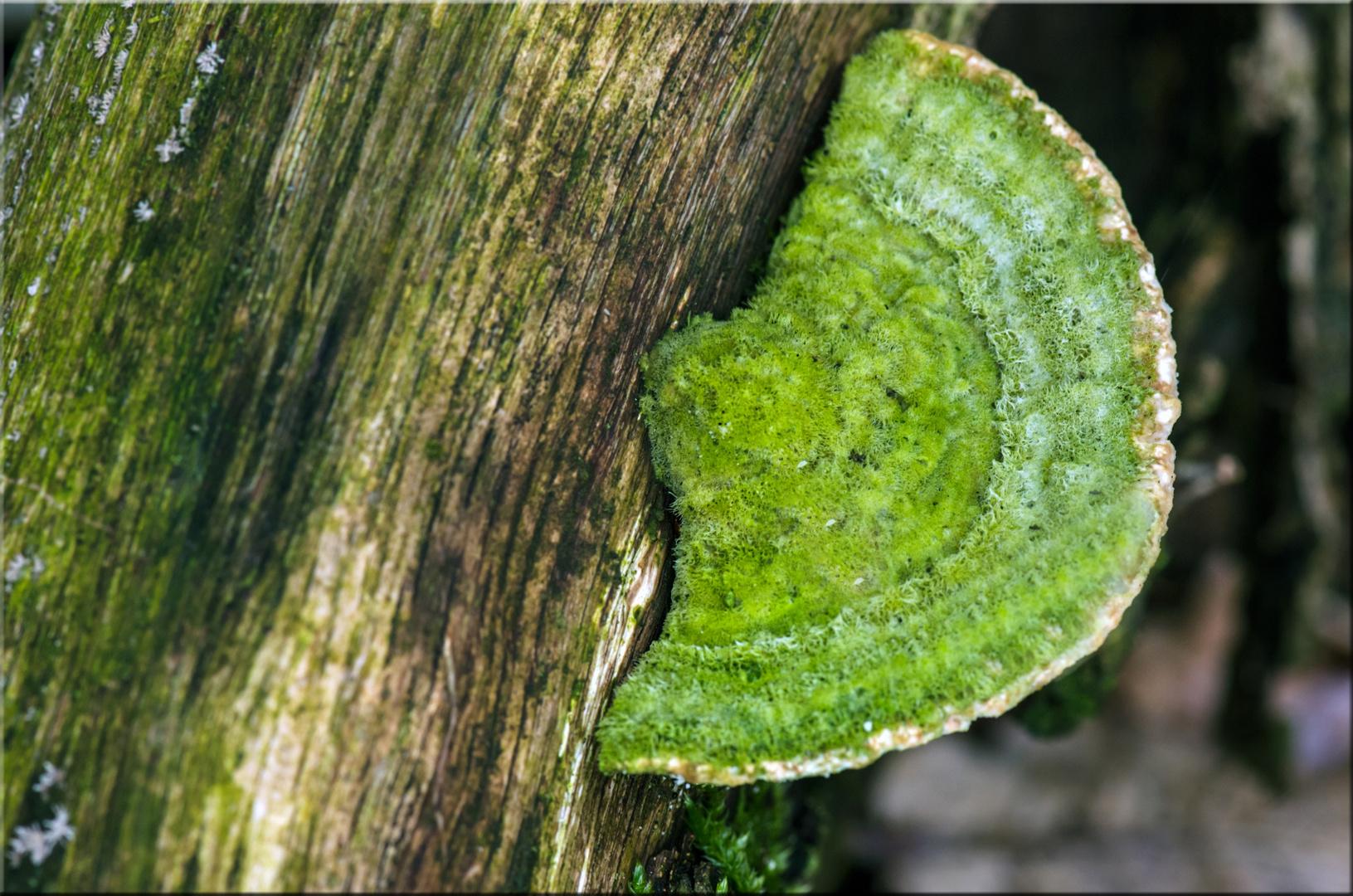 Pilze (1)