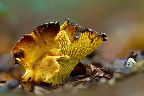 Pilze 120/12 - Vergammelter ?? Pilz