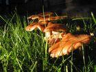 Pilze am Abend