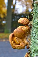 Pilze am Baumstamm