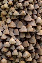 Pilze am toten Holz