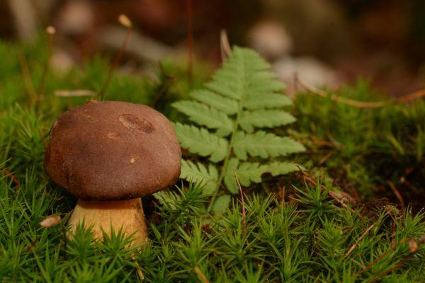 Pilze am Waldboden