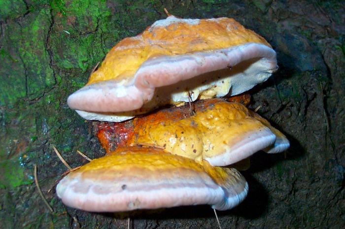 Pilze an einem Baumstamm