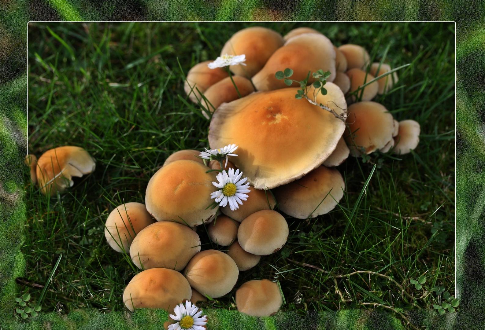 Pilze fressen Rasen an...