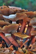 Pilze gegen Ende ihres Daseins