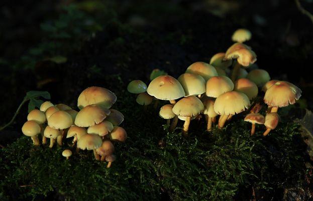 Pilze im ersten Morgenlicht