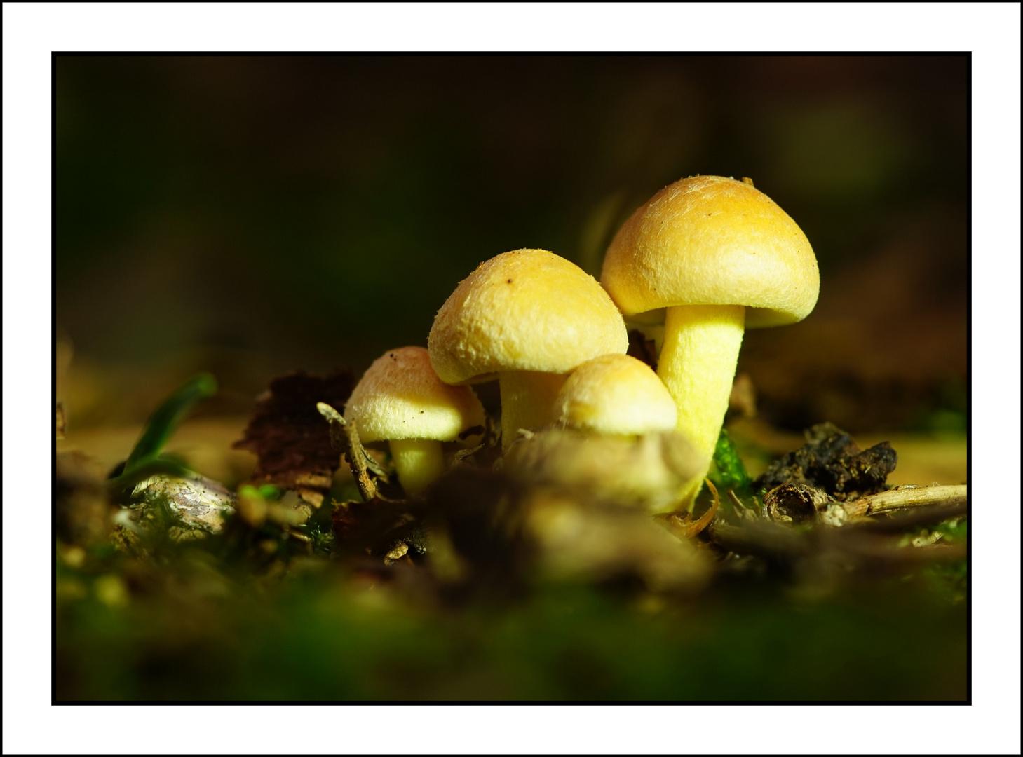 Pilze im ersten Sonnenlicht