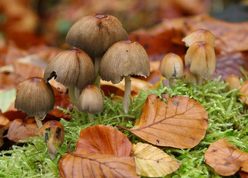 Pilze im Herbstlaub